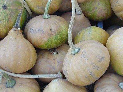 David's Garden Seeds Pumpkin Seminole (Orange) 25 Organic Heirloom Seeds (Pumpkin Pie Fresh Pumpkin Martha Stewart)