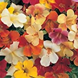 "(AMO)~""MAGIC MIX"" MIMULUS~Seeds!!!!~~~Lovely Little Monkey Flower!"