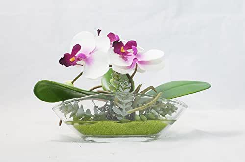 Orquídeas Phalaenopsis En Un Plato De Vidrio Ovalado