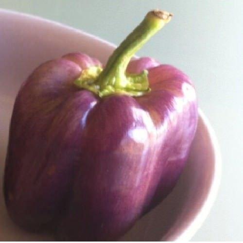 Pepper, Purple Beauty Bell Pepper Non-GMO 50 Seeds