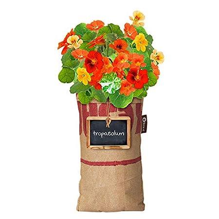 Baza Mini Garden Hängender Garten Blumen verschiedene Sorten Marigold Edelwicken Kapuzinerkresse (Edelwicken)