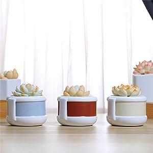 Danmu 3pcs a Set Random Color Ceramic Planter for Succulents Cactus and Air Plants (Plants Not Included) 83