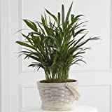 Deeply Adored Palm Planter - Fresh Flowers Hand Delivered in Albuquerque Area