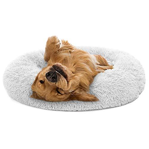 Most Popular Dog Beds & Furniture