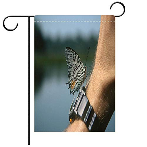 BEICICI Garden Flag Double Sided Decorative Flags Wild baeotus Butterfly Drinks Salt Off Traveler Wrist Tampopata River Peru Best for Party Yard and Home Outdoor Decor