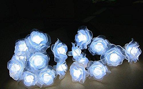 Premium Solar Garden Lights - 7