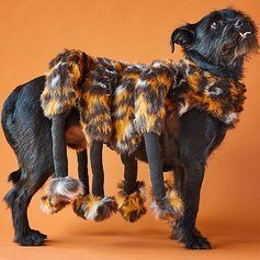 Spider Dog Costume - Cat Costume - Pet Costumes by Pet Krewe by Pet Krewe (Image #6)