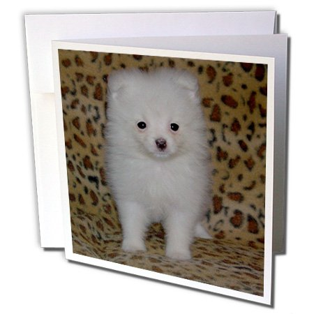 3d Rose 3dRose White Pomeranian Puppy - Greeting Cards, 6...