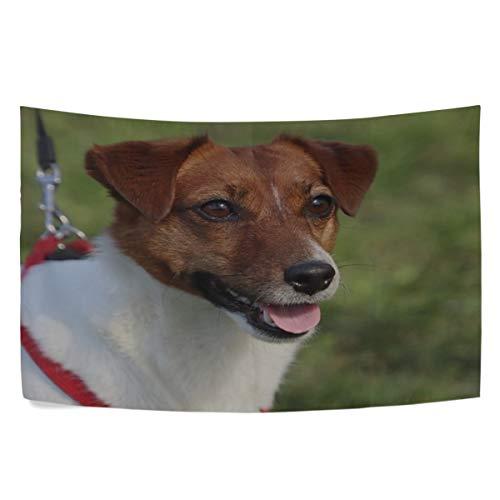 - RH Studio Tapestry Wall Hanging Dog Jack Russell Terrier Animals Dorm Livingroom Bedroom Bedspread Sofa Cove Living Kids Girls Boys Room Dorm Deco (60x40inch)
