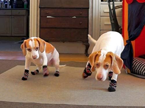 Cute Funny Puppys (Funny Dogs Wearing Socks)