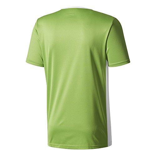 Rave T shirt Green 18 Adidas Entrada white Uomo fpPSSx