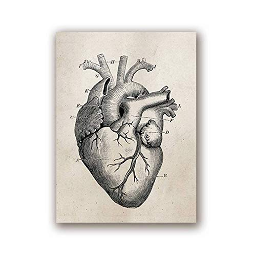 FAT BIG CAT Human Anatomy Science Vintage Posters Art Prints, Medical Anatomy Canvas Painting Medical Doctor Clinic Wall Pictures Decor,A3 30x42 cm No Frame,PH616