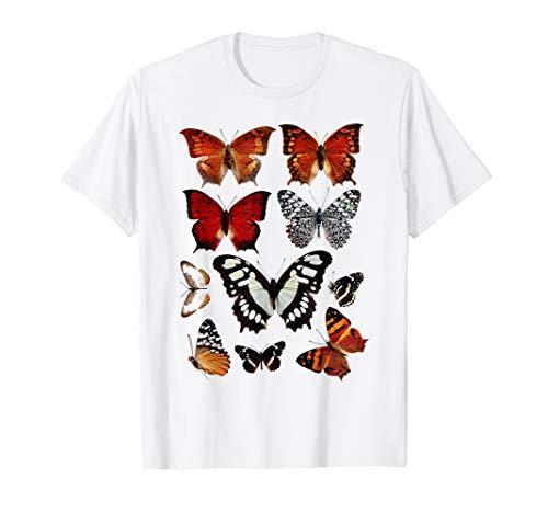Vintage Butterflies Collection Butterfly Species scientific ()