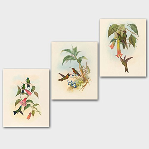 (Set of 3) Hummingbird Prints, Bird Art for Office (Bedroom Botanical Birds, Cottage Style Home Wall Decor) – Unframed