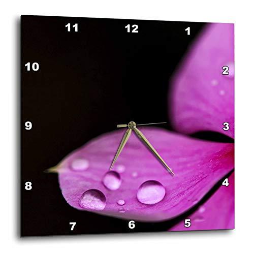 (3dRose Andrea Haase Nature Photography - Close Up Of Water Drops On Pink Petal - 13x13 Wall Clock (dpp_288969_2))