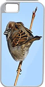 Blueberry Design iPhone 4 iPhone 4S Case Brown Bird on a brown branch With blue sky background - Ideal Gift by icecream design