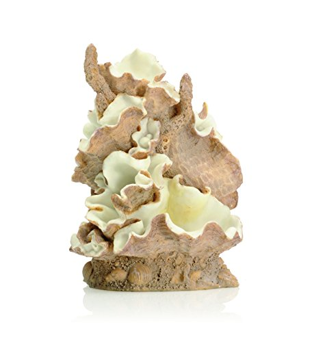 (biOrb 46108.0 Clamshell Ornament Medium)