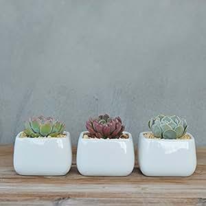 Redondeadas cúbicos planter-pure color blanco porcelana Cactus suculentas pot- moderno minimalist-home decoración