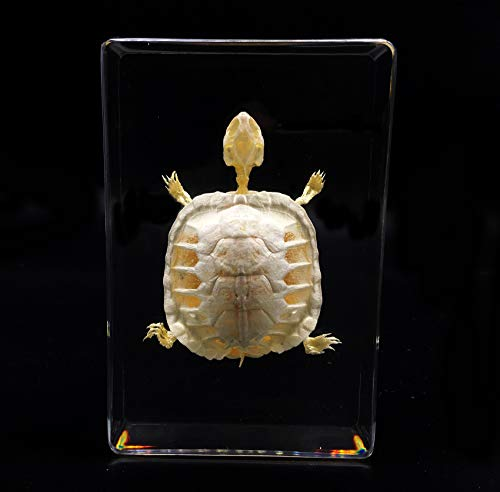 Real Turtle Skeleton Specimen in Acrylic Block Paperweights Science Classroom Specimens for Science Education(5.3x3.5x1.4 Inch)