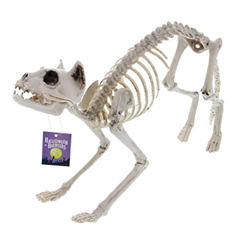 Halloween Haunters Life Size Skeleton Kitty Cat Prop Decoration - Scary 10'' High x 21'' Long Creepy Haunted House Kitten by Halloween Haunters