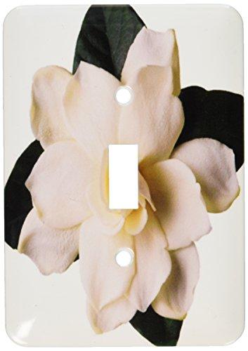 3dRose lsp_16811_1 Gardenia Toggle Switch - Gardenia Clock Plate