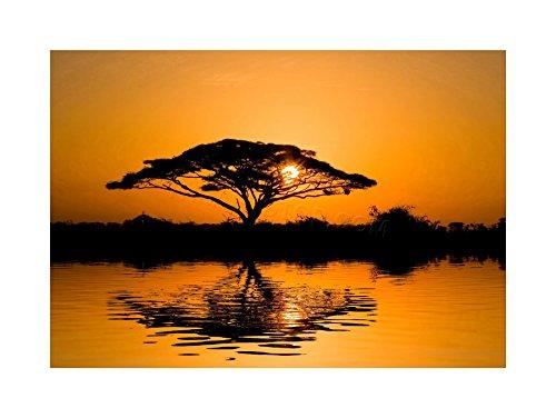 (The Art Stop Photo DT Acacia Tree Sunrise Silhouette Framed Print F12X3227)