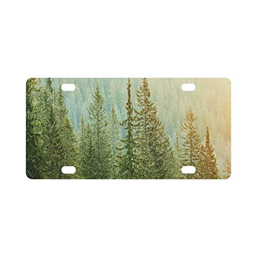 INTERESTPRINT Healthy Green Trees in a Forest of Old Spruce, Fir and Pine Trees Metal License Plate for Car, Metal Auto Tag Decor