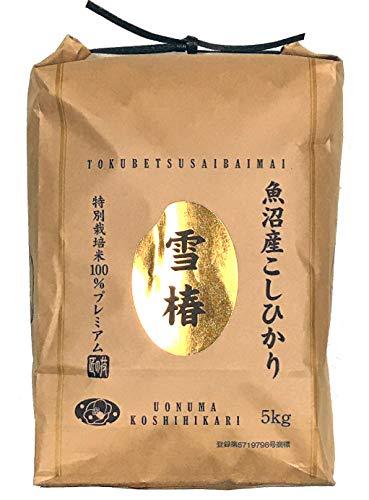Japanese Extremely Rare, Ultra Premium, Uonuma, Yuki Tsubaki Koshihikari White Rice,  (11 Pound / 5Kg)