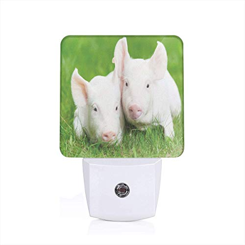 Colorful Plug in Night,Two Young Baby Piglet On Green Grass Pig Farm Animal Barn Husbandry Agriculture,Auto Sensor LED Dusk to Dawn Night Light Plug in Indoor for Childs -