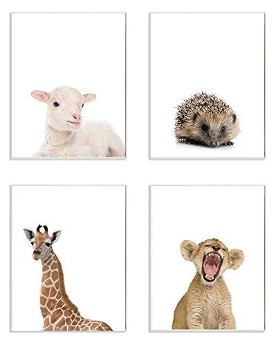 (Stupell Home Décor Baby Animal Studio Portrait Lamb Hedgehog Giraffe Lion 4pc Wall Plaque Art Set, 10 x 0.5 x 15, Proudly Made in USA)