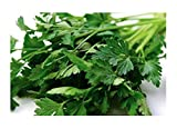 italian parsley - Italian Giant Parsley Seeds, 200+ Premium Heirloom Seeds, ON SALE!, (Isla's Garden Seeds), Non Gmo Organic, Highest Quality!
