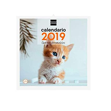 Finocam 936928 - Calendario de pared 2017, catalán, diseño Gatos