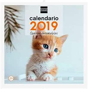 Finocam 936928 - Calendario de pared 2017, catalán, diseño Gatos: Amazon.es: Oficina y papelería