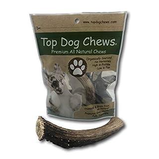 Top Dog Chews Premium Large Grade A Whitetail Deer Antler for Dogs - Single Antler