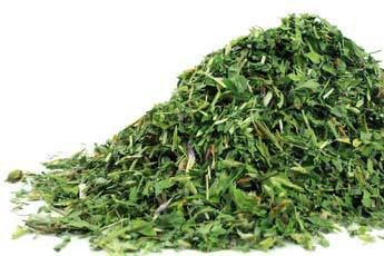 Herbs Red Clover - 4