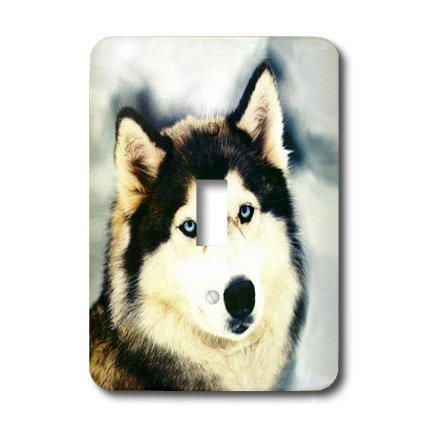- lsp_517_1 Dogs Siberian Husky - Staring Siberian Husky - Light Switch Covers - single toggle switch