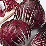 Radicchio Seeds - 300 mg - Zesty!