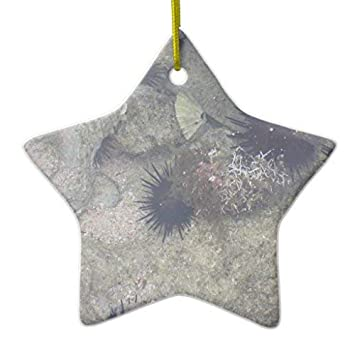 Amazon Com Zora Camp Sea Urchins At Labadee Xmas Decoration Ceramic