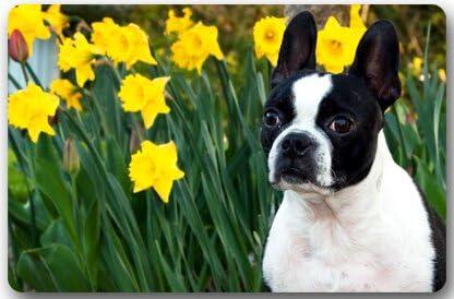 Boston Terrier Rectangle Entryways Non Slip Doormat Floor Mat – 23.6 L x 15.7 W , 3 16 Thickness