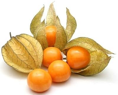Cape Gooseberry,Giant Poha Berry,100 SEEDS (Physalis Peruviana)