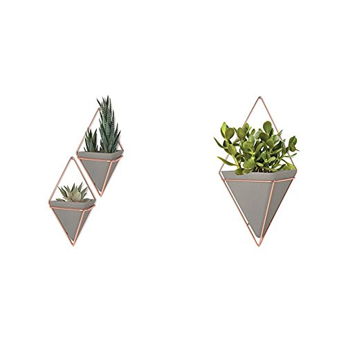 Umbra Cubby (Umbra Trigg Hanging Planter Vase & Geometric Wall Decor Container - Great For Succulent Plants, Air Plant, Mini Cactus, Faux Plants and More, Concrete Resin/Copper (Set of 3) Small (2) and Large (1))