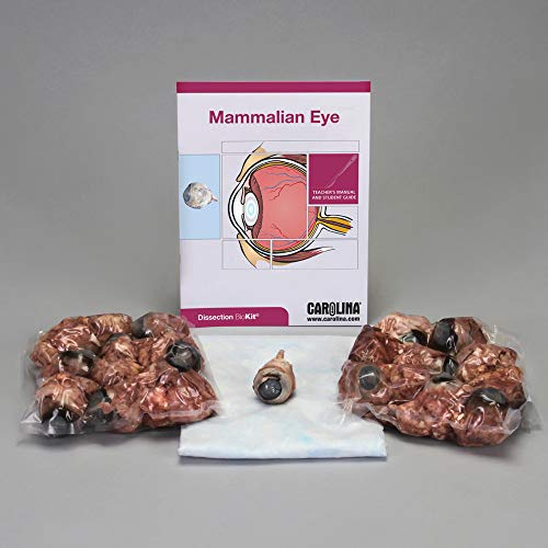 - Mammalian Eye Dissection BioKit