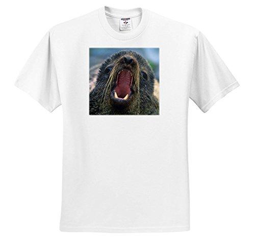 Danita Delimont - Seals - Northern Fur Seal, Callorhinus Ursinus, California, USA - T-Shirts - Adult T-Shirt 4XL (TS_259037_7) - Northern Fur Seal