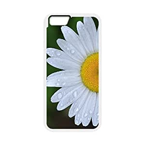 """Daisy Discount Personalized Cell Phone Case for iPhone6 Plus 5.5"""", Daisy iPhone6 Plus 5.5"""