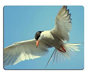 Birds Animal Flight Mid Air Mouse Pads Customized Made to Order Support Ready 9 7/8 Inch (250mm) X 7 7/8 Inch (200mm) X 1/16 Inch (2mm) High Quality Eco Friendly Cloth with Neoprene Rubber MSD Mouse Pad Desktop Mousepad Laptop Mousepads Comfortable Computer Mouse Mat Cute Gaming Mouse pad