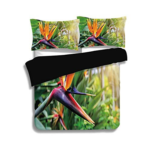 iPrint Black Duvet Cover Set Queen Size,Plant,Close up Image of Strelitzia Reginae Bird of Paradise Flower Madeira Island Portugal Decorative,Multicolor,Decorative 3 Pcs Bedding Set by 2 Pillow Shams