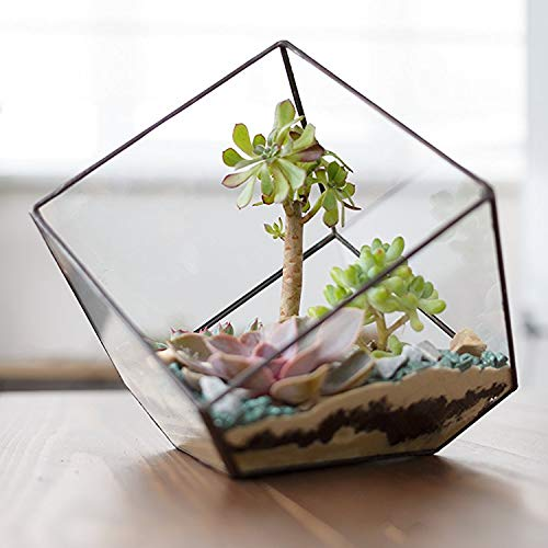Modern Artistic Clear Glass Cube Box Glass Plant Terrarium/Decorative Votive Candle, Tea Light Holder