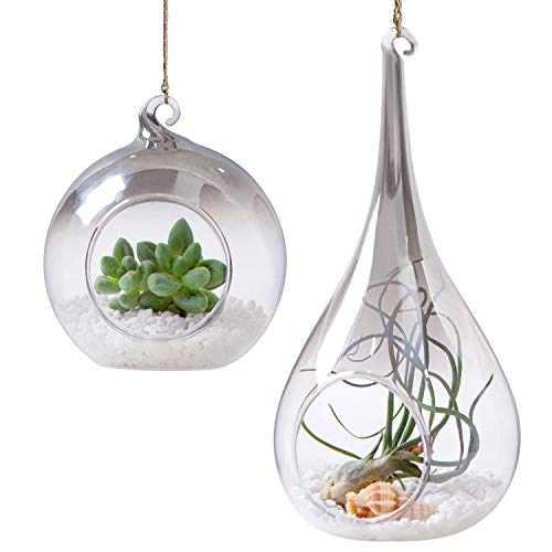 (Mkono 2 Pack Glass Hanging Planter Terrarium Air Plant Holder Tealight Vase Hanger Home Decoration for Candles Succulent Moss Air Fern Tillandsias, Globe and Teardrop with Gray Plating Gradients)