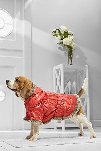 english bulldog dresses - 7