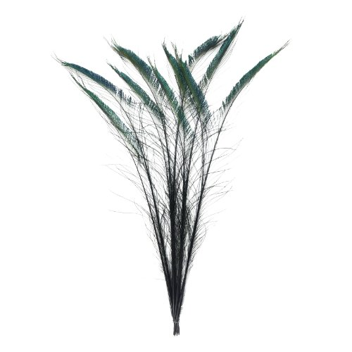 Zucker Feather (TM) - Peacock Swords Stem Dyed - Black